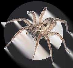 icone-araignees